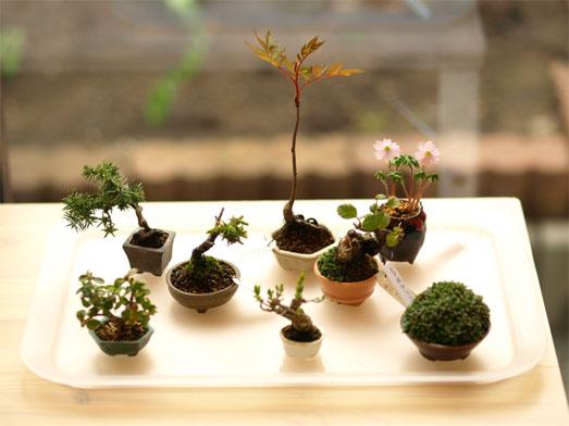 bonsai1305