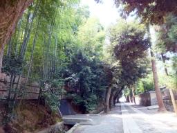 matsu_kyoto_hitetsu_daitokuji03S