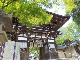 matsu_kyoto_hitetsu_matunootaisya02S