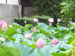 matsu_kyoto_hitetsu_nishihonganji04S